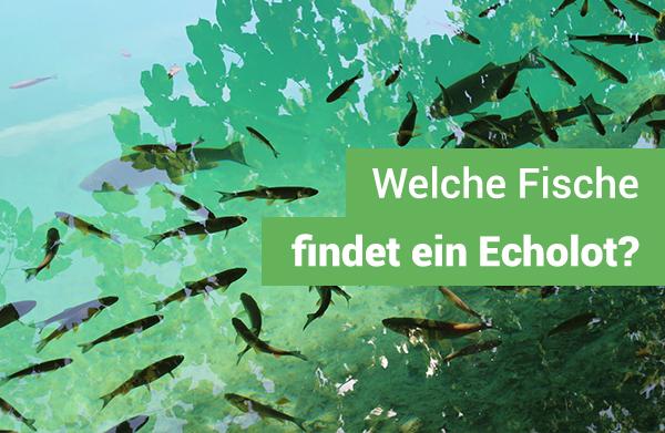echolot-welche-fische-finden